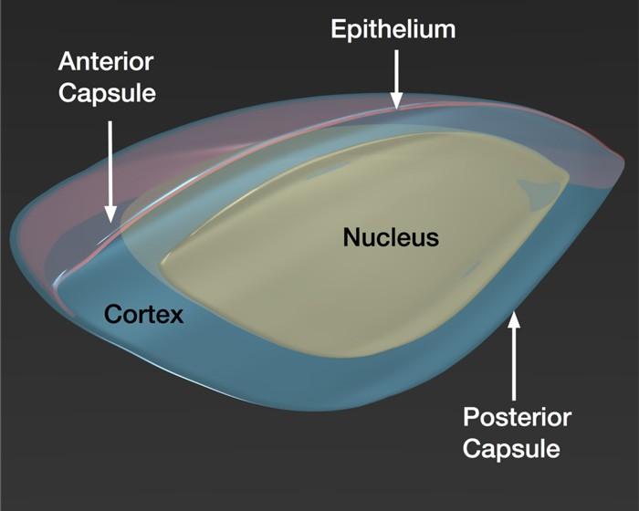 nucleus eye